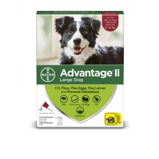 Advantage Red II 4 pack- Dogs 21 - 55 pounds