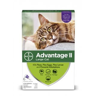Advantage II Purple 12 pack  Cats 9 lbs &over